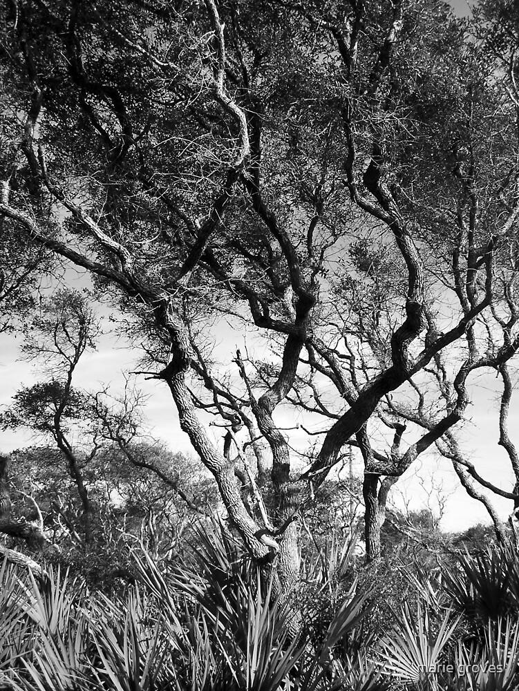 Tree Quartet I - The Beach Oak by marie groves