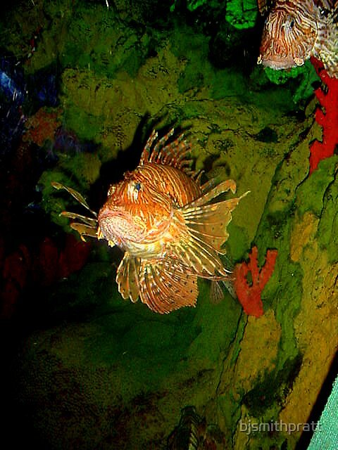 Lionfish by bjsmithpratt