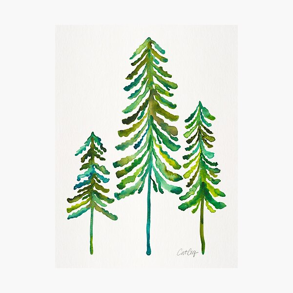 Pine Trees – Green Palette Photographic Print