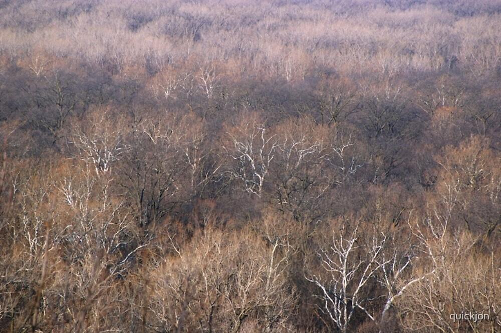 Woods in winter by quickjon
