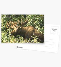 Full Bull Postcards