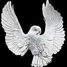 Snowy Owl by Walter Colvin
