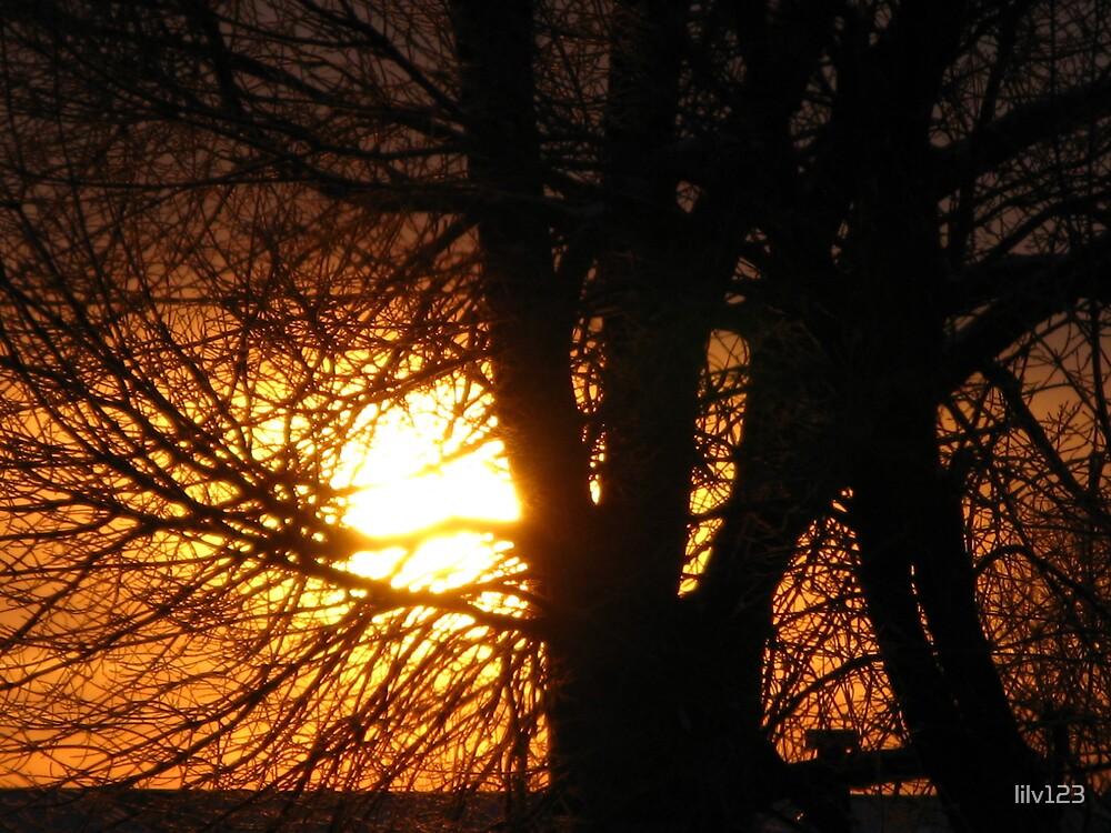 Morning Sun by lilv123