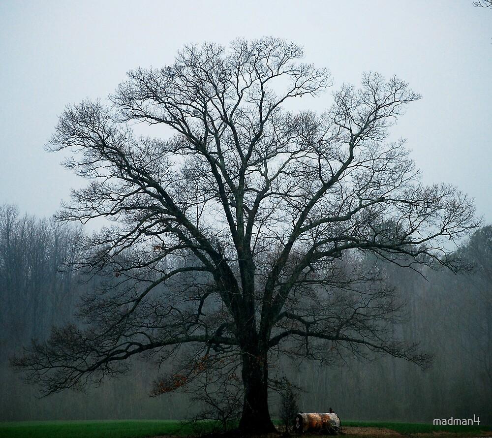 Foggy Afternoon Oak by madman4