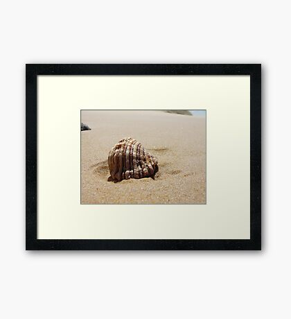 Croajingolong National Park - Shell Framed Print