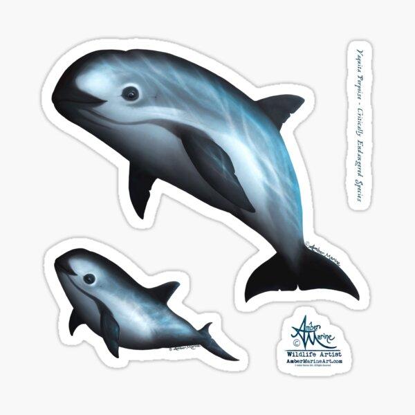 Treacherous Waters - Vaquita Porpoise Art (Copyright 2015) Original Digital Painting by artist Amber Marine  Sticker