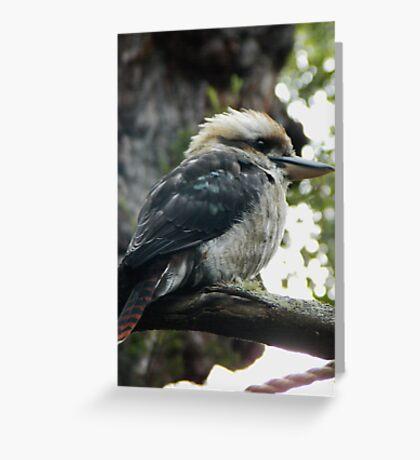 'Kooka' Greeting Card