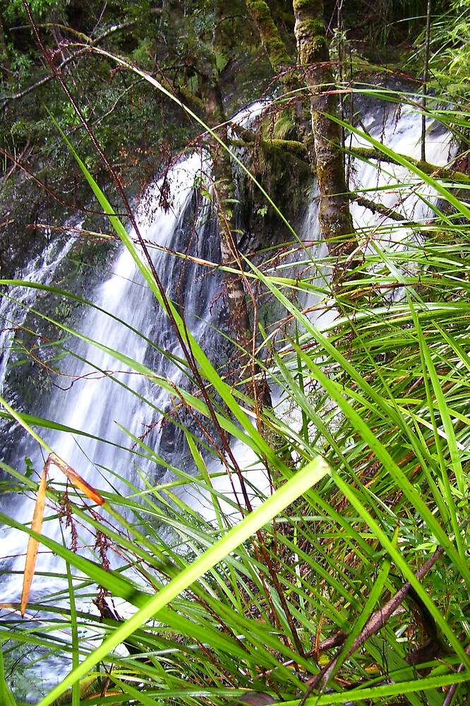Hogarth Falls, Strahan - west coast of Tasmania by gaylene