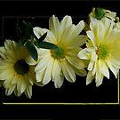 Spring Yellow by Ann Chane