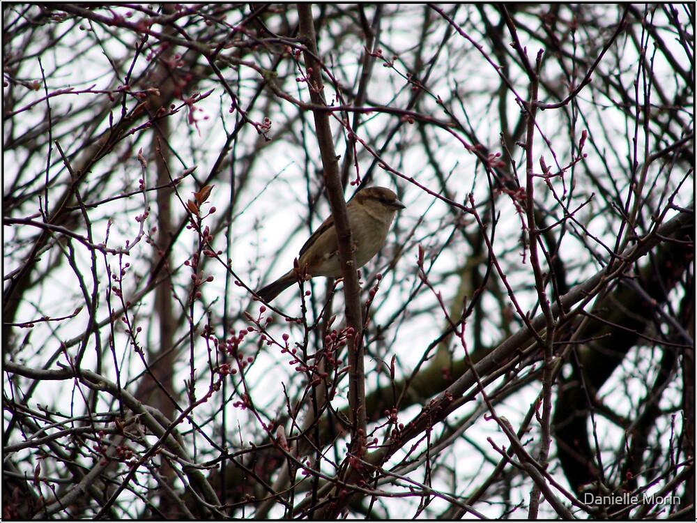 Birdie by Danielle Morin