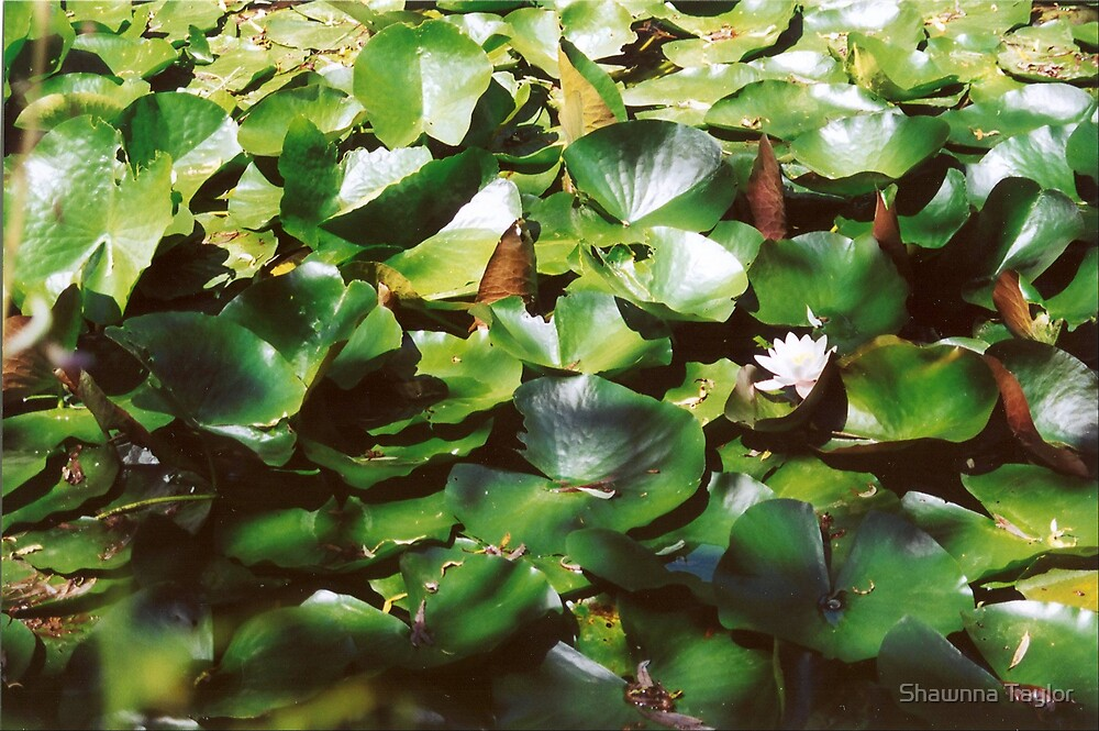A Jungle Of Lily Pads by Shawnna Taylor