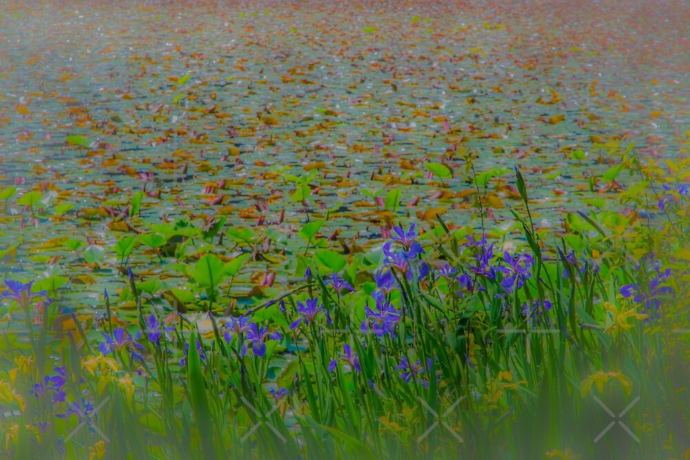 irises and lily pads by jackson photografix