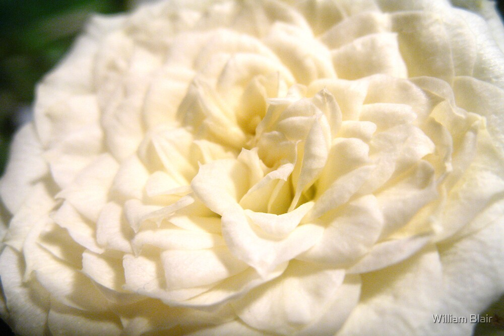 Full Bloom by William Blair