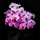 Orchidee by Ronny Falkenstein