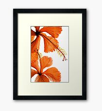 Hibiscus Falling Framed Print