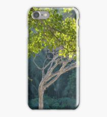 morning light in the jungle - luz de la mañana en la selva iPhone Case/Skin