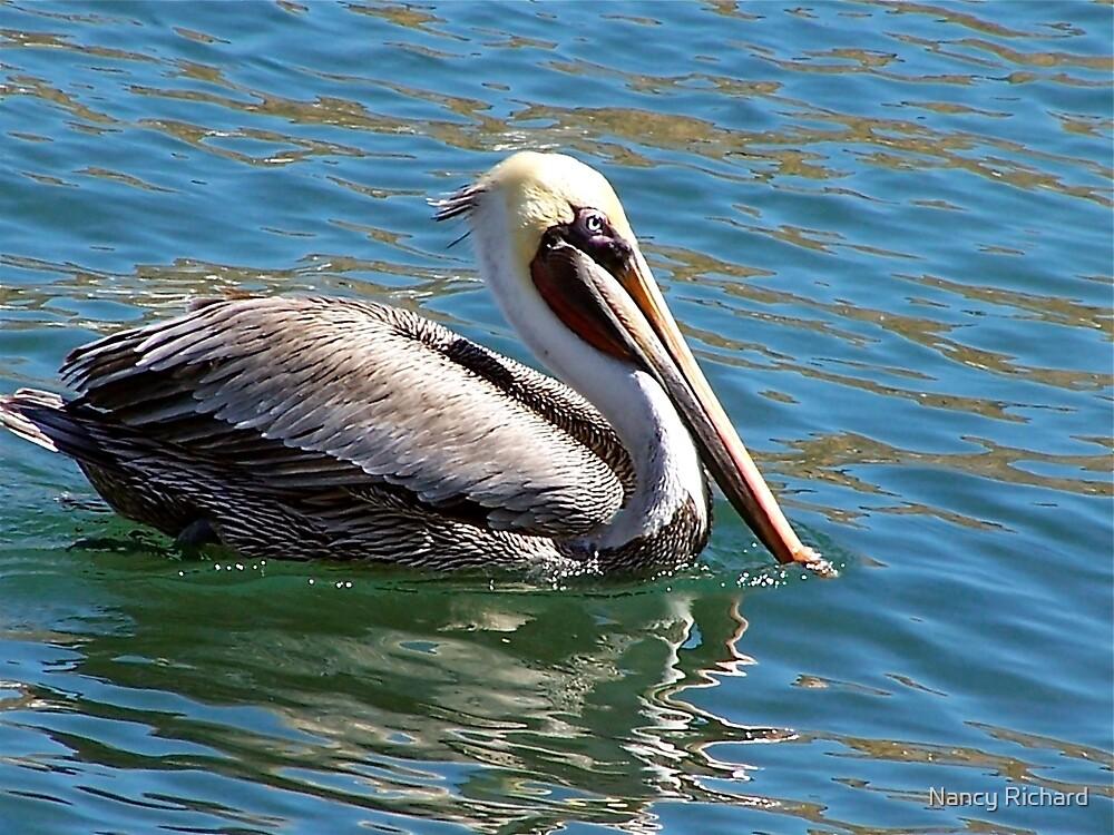 Wonderful bird is the pelican...... by Nancy Richard
