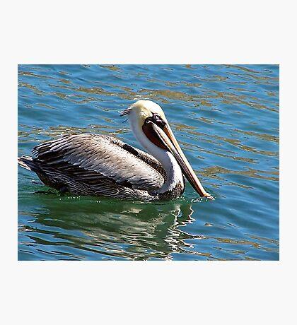 Wonderful bird is the pelican...... Photographic Print
