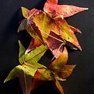 Autumn Leaves 1 by Werner Padarin
