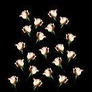 Roses on Black by Elaine Bawden
