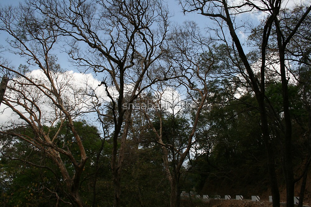 trees by snsabarinath