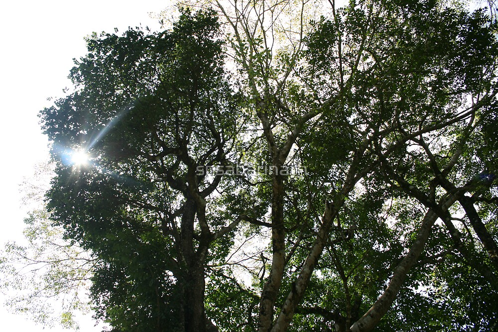 tree in sun by snsabarinath
