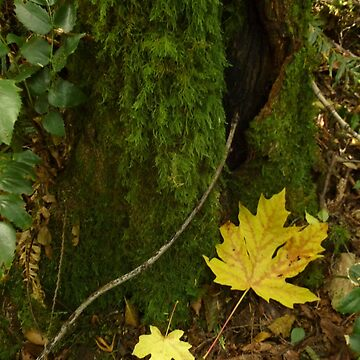 Autumn in the Rain Forest by elainebawden