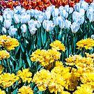 Tulip Garden by Tina Hailey