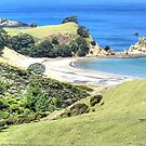 The view from above Palmer's Beach.......!! by Roy  Massicks
