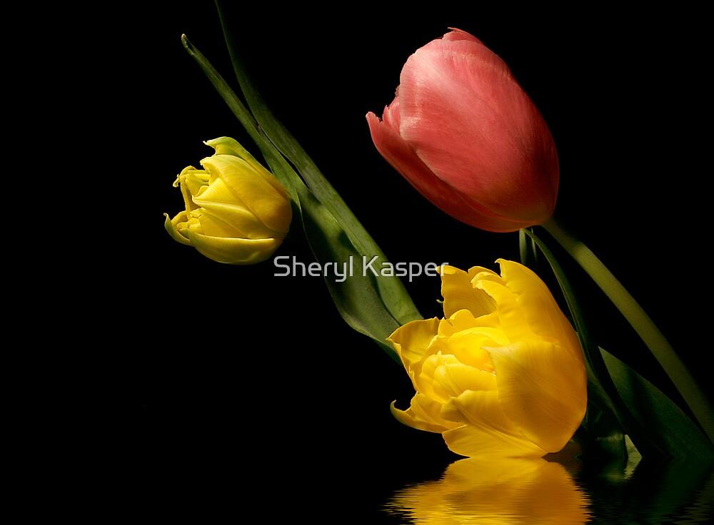 Tulip Medley by Sheryl Kasper