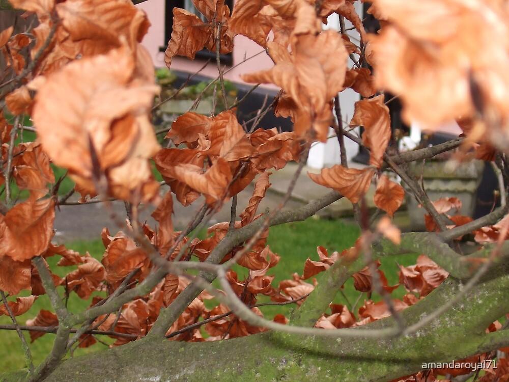 autumn curls by amandaroyal71