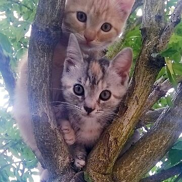 Kittens on a tree. by dreamingserpent