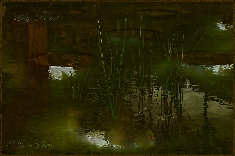 Lily Pond by JaneSiet