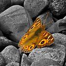 Moth on b&w by UncaDeej