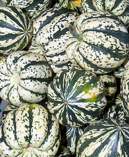 Colorful winter acorn squash on display by Zigzagmtart