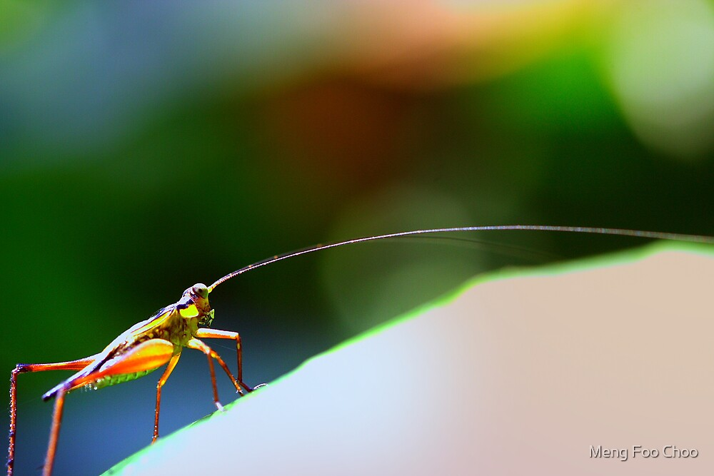 Long hone cricket by Meng Foo Choo