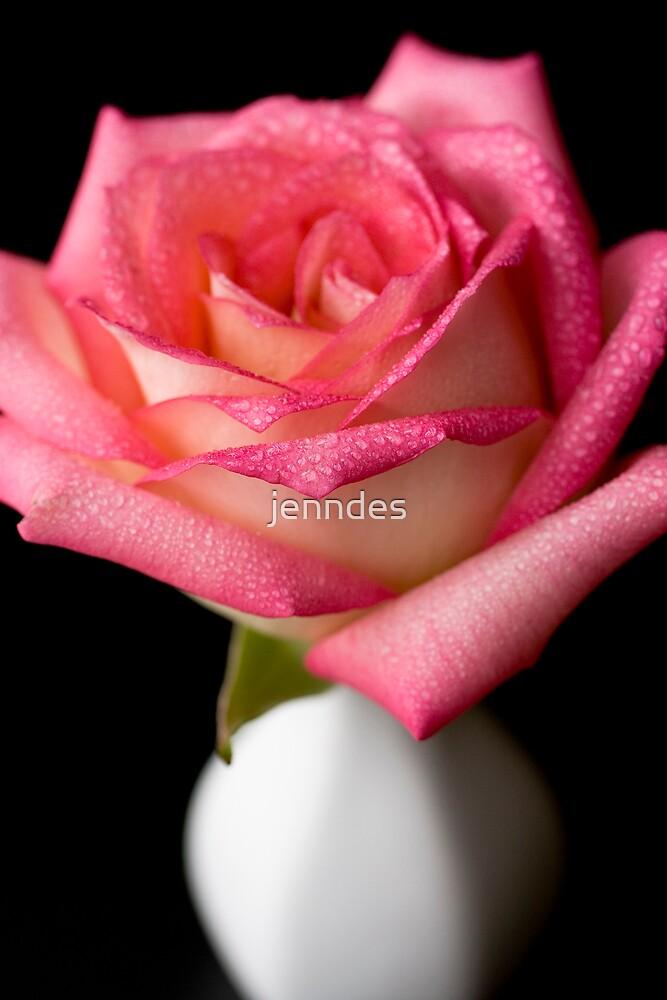 Fushia Rose in Vase by jenndes