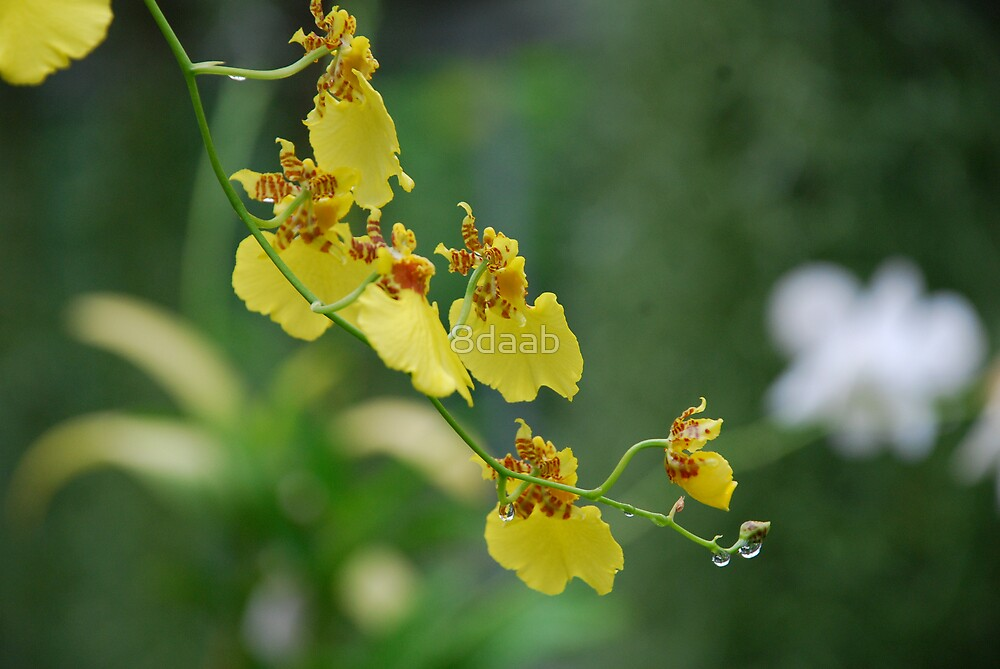 Hanging Orchid by 8daab