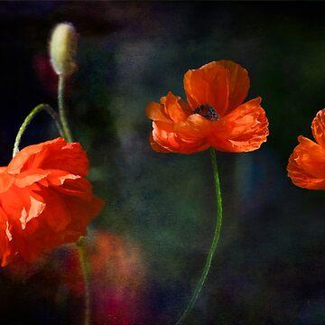 My Favorite Poppy by LudaNayvelt