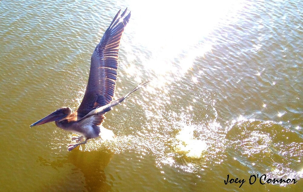 Pelican Across Water by Joey O'Connor