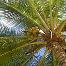 Palm Tree by Kayleigh Sparks