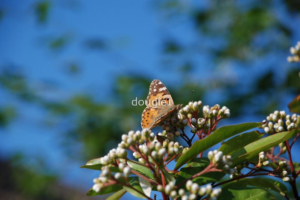 butterfly 3 by dougie1