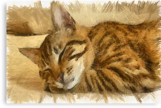 Let Sleeping Cats Lie by taiche