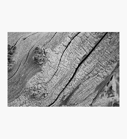 Bark Photographic Print
