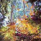 Autumn in the Dandenong Ranges: Sherbrooke, 2017 by Fiona Lokot