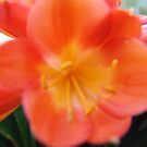 Center of the Orange Flower In my yard!  It's beautiful in here! by leih2008