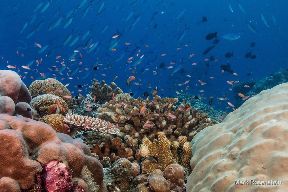Kicha Reef by Mark Rosenstein