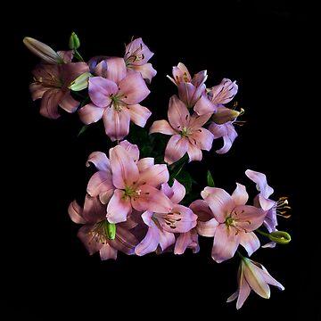 Pink Lilies by 1mjordan