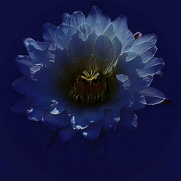 Night Flower by tweetkater