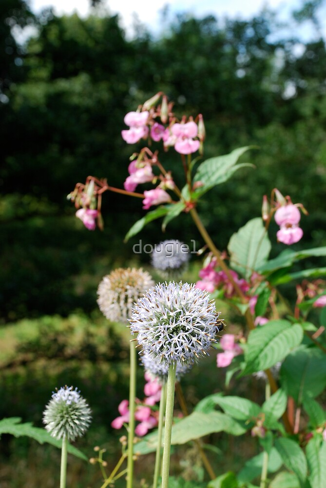 Flowering wild by dougie1